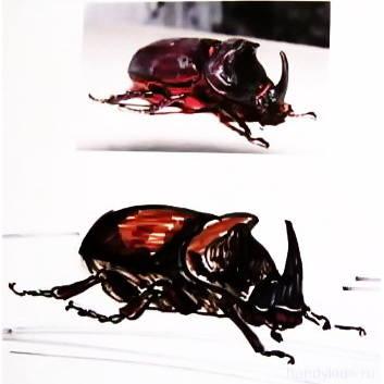 Как нарисовать жука-носорога