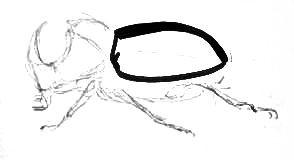 Нарисуем жука-носорога