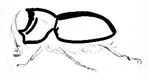 Поэтапный рисунок жука-носорога
