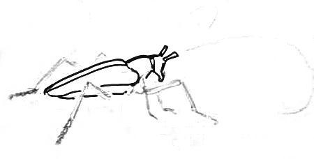 Нарисуем жука-дровосека