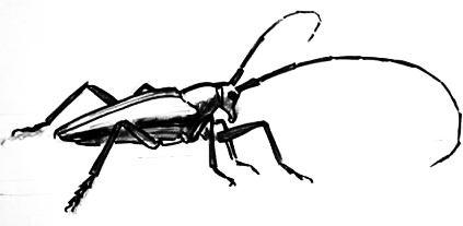 Рисунок жук-вид сбоку.