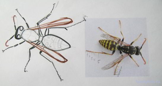 Строение ног осы