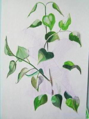 Как нарисовать листья сирени