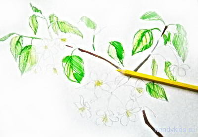Рисуем цветы яблони поэтапно