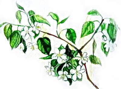 Рисунок яблоня