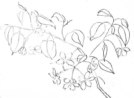 Ветка яблони рисунок карандашом