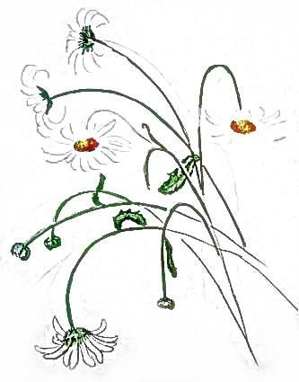 Рисуем ромашки поэтапно