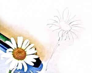 Рисуем цветок ромашки