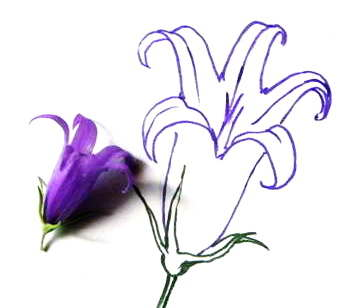 Рисуем цветок колокольчик