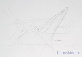 Кузнечик -набросок карандашом