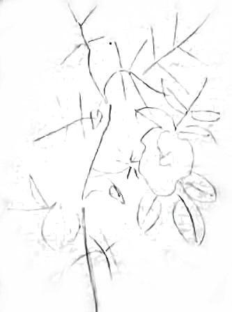 Рисуем дикую розу -шиповник