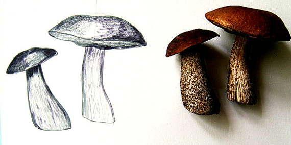 Рисунок грибы с натуры