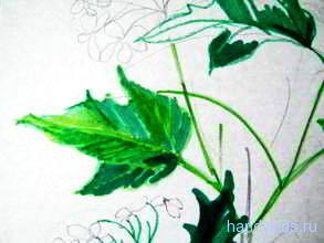 Рисунок -лист калины