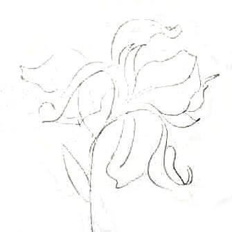 Цветок ириса рисунок
