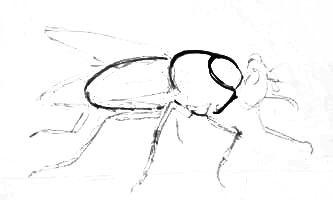 Урок поэтапного рисования мухи.