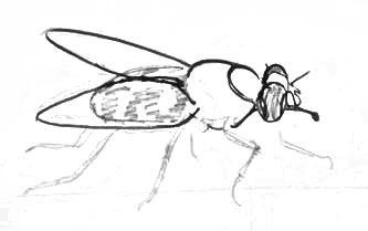 Нарисуем муху-3