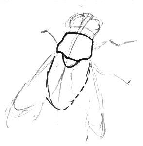 Рисуем муху - шаг 1