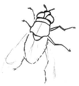 Рисуем муху поэтапно