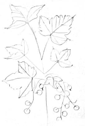 Рисунок Смородина
