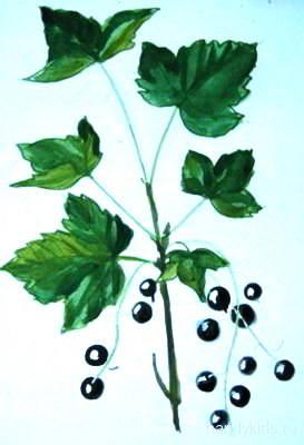 Рисунок -ветка смородины с ягодами