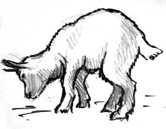 Рисунок Козлёнок 13