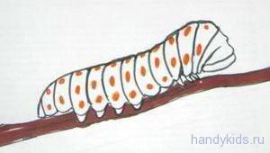 Узор на теле гусеницы