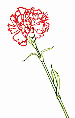 Рисунок гвоздика