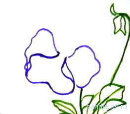 Поэтапно рисуем цветок анютины глазки