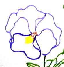 Цветок Анютины глазки -рисунок