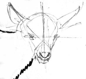 Нарисуем голову козлёнка