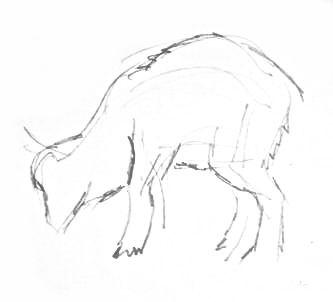 Козлёнок -рисунок карандашом