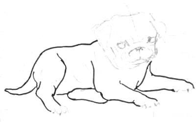 Рисуем щенка мопса