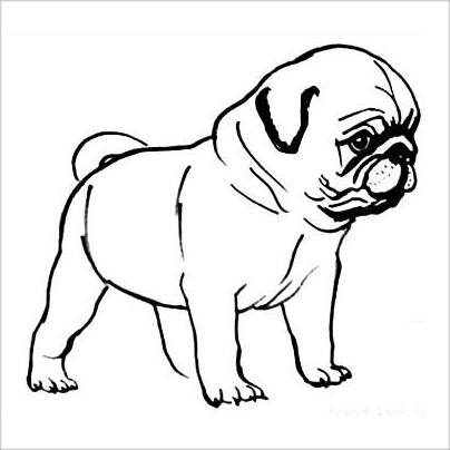 Раскраска щенок мопс