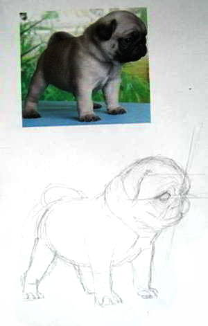 Нарисуем щенка мопса