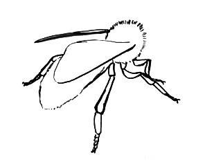 Нарисуем пчелу