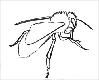 Раскраска Пчела 1