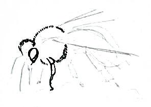 Нарисуем пчелу поэтапно