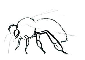 Урок рисования пчелы