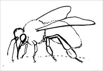 Рисунок-раскраска пчела
