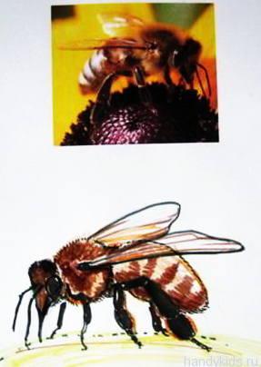 Как нарисовать пчелу.