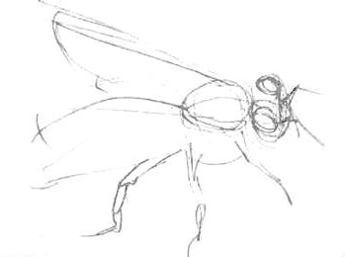 Эскиз -пчела