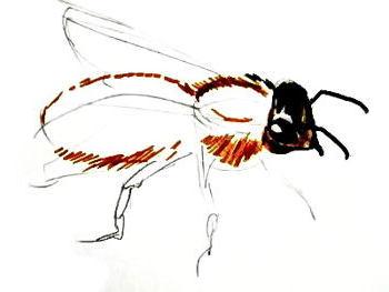Нарисуем пчелу реалистически