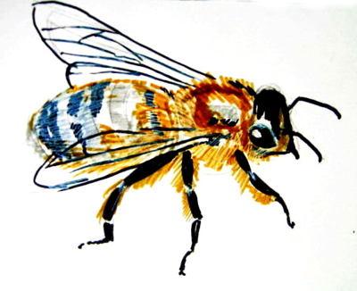 Реалистический рисунок Пчела