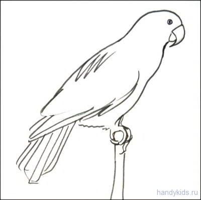 Раскраска попугай