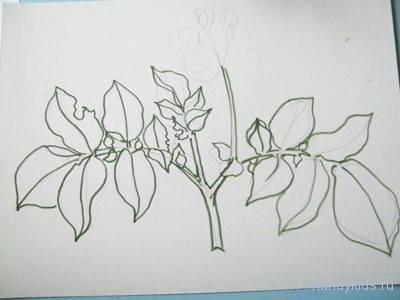 Как нарисовать картофель