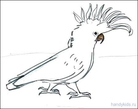 Раскраска попугай какаду