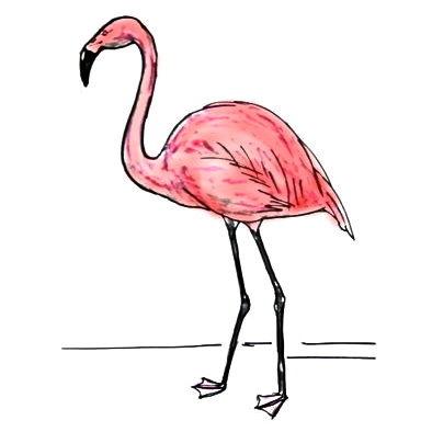 Фламинго рисунок