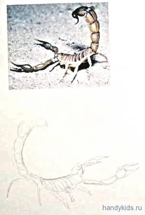 Нарисуем скорпиона