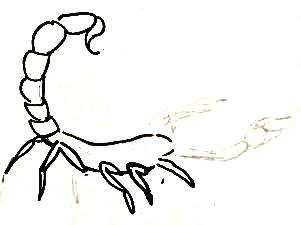 Нарисуем скорпиона поэтапно