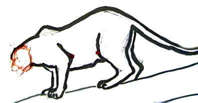 Нарисуем пантеру
